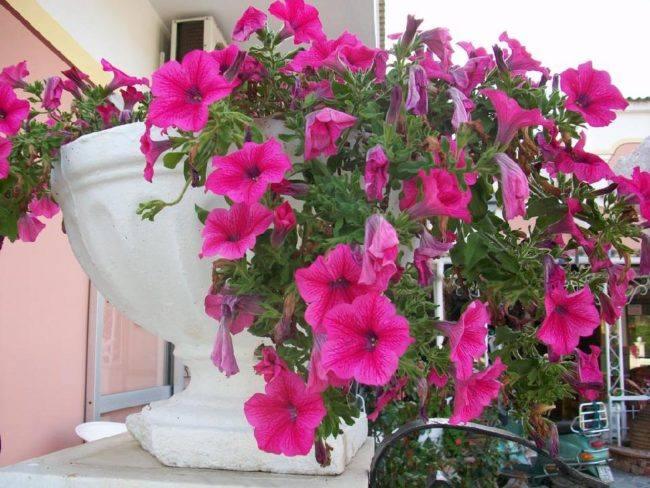hotel-maltezos-gouvia-corfu-family-holidays-garden